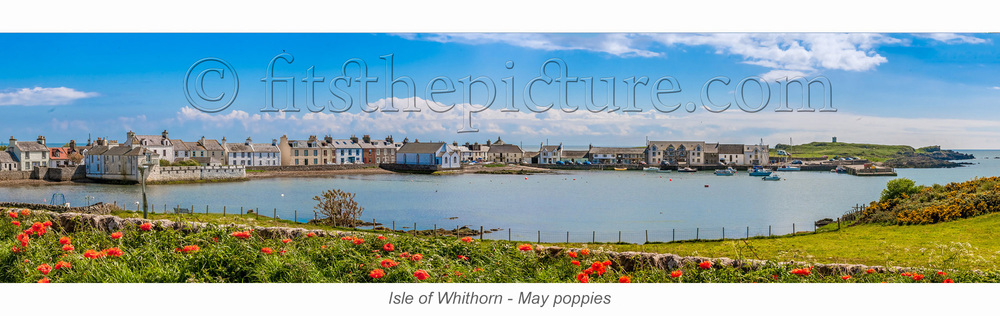 isle_of_whithorn_may_poppies.jpg