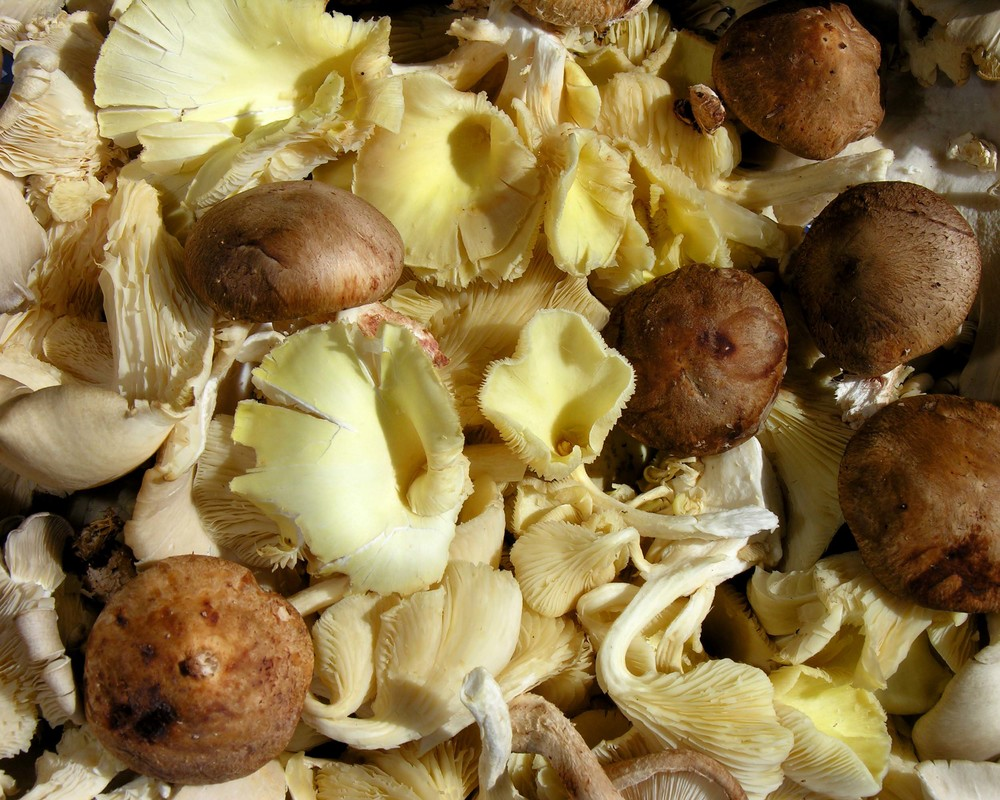 Z mushrooms 1.jpg