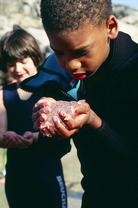 Boy Examines Tunicate Larvae