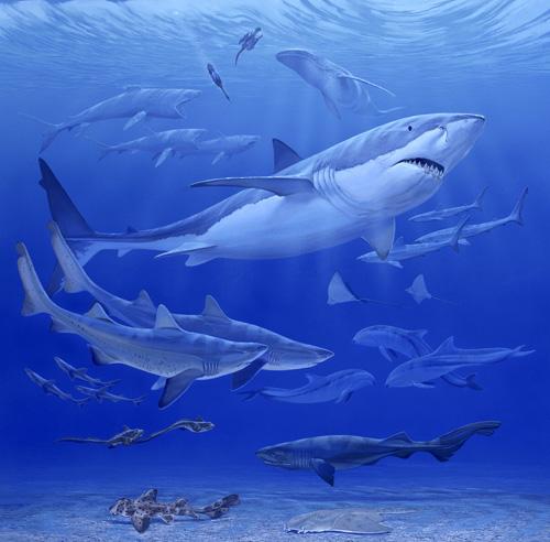 Oligocene Sea
