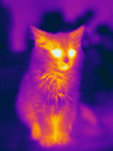 Cat Thermogram