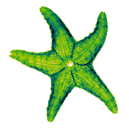 Starfish X-ray