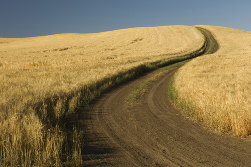 Road through wheatfield