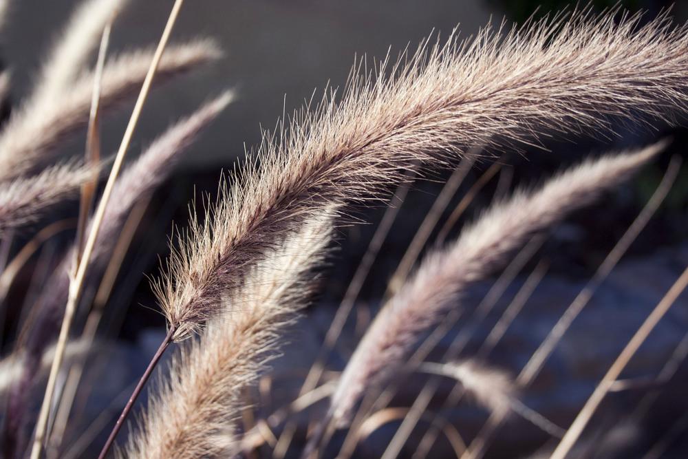 Plant & Texture series