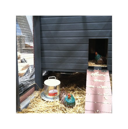 Chicken Coop-Pic Close up-White-54.png