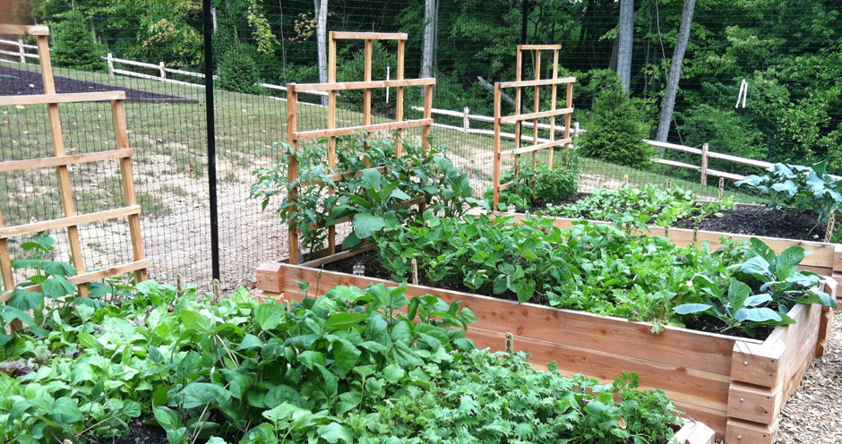 Raised Garden Beds with Empire Trellises