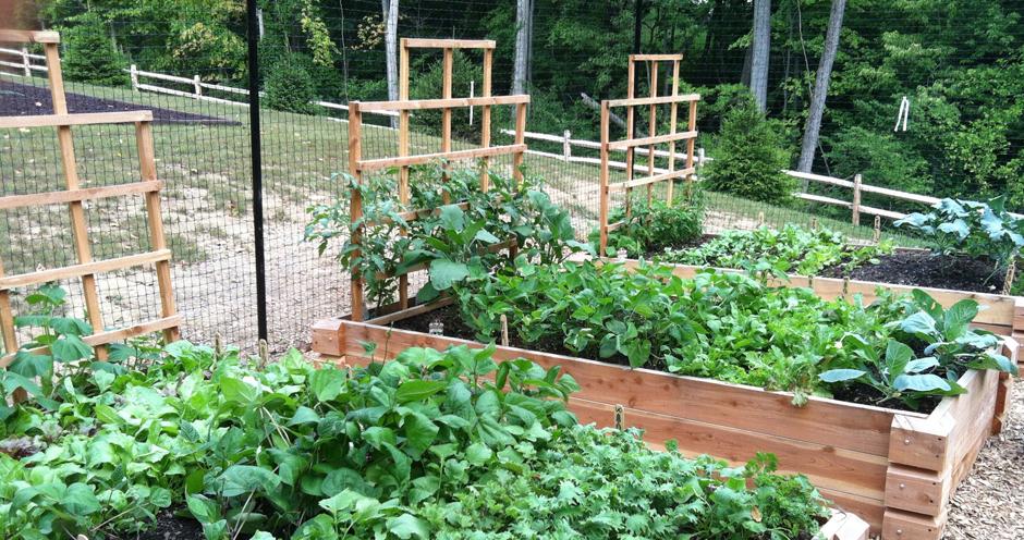 Raised Garden Beds with Empire Trellises