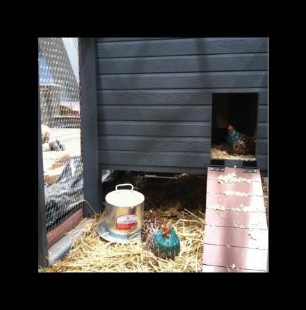 Chicken+Coop-2_2108.png