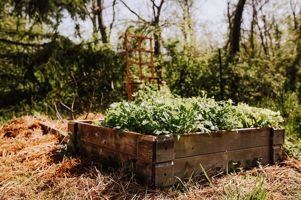 Garden-with-Trellis.jpg