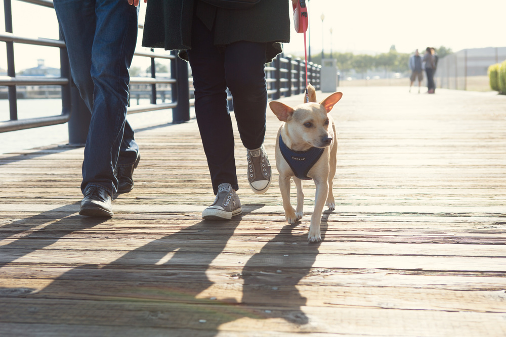 dog on boardwalk.jpg