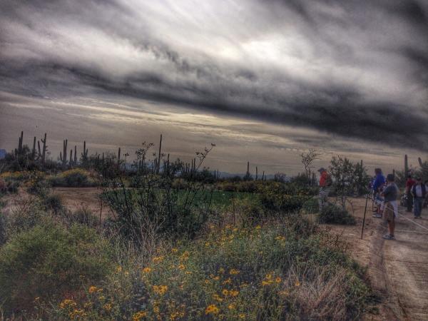 Desert blooms.
