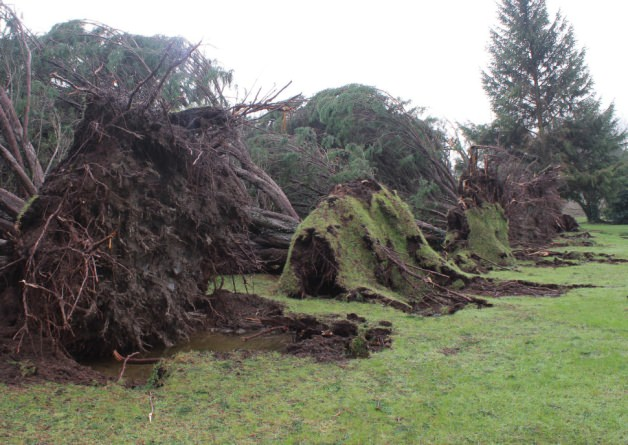 Hundreds of trees fell at Limerick Golf Club