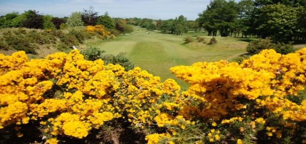 A splash of colour at Royal Curragh. Picture via  curraghgolf.com