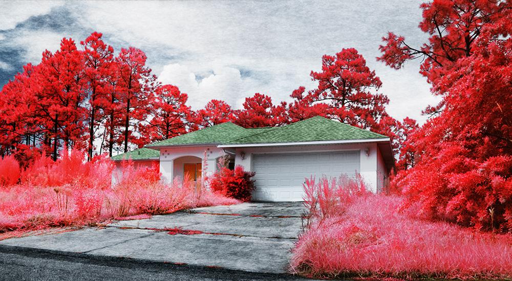 Blight *Medium Format Infrared
