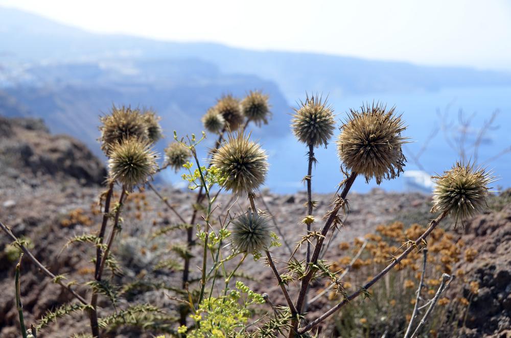 Greece_Santorini_for6_©Hogger&Co.057.jpg