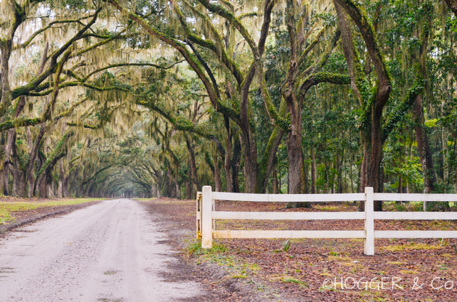 Savannah_Wormsloe_Plantation_2013_©HOGGER&Co._019.jpg