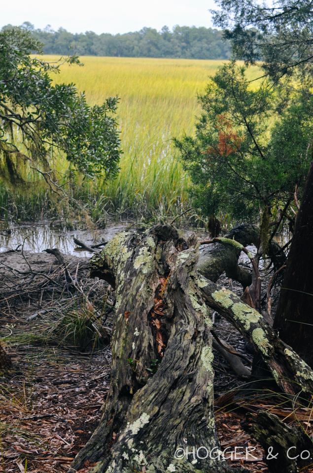 Savannah_Wormsloe_Plantation_2013_©HOGGER&Co._004.jpg