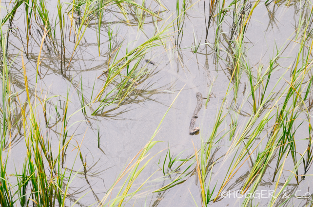 Savannah_Wormsloe_Plantation_2013_©HOGGER&Co._025.jpg