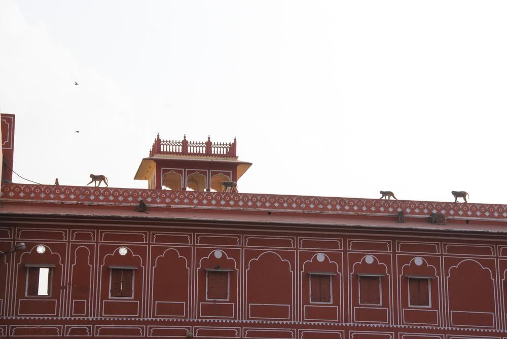 Jaipur_©HOGGER&Co._005.jpg