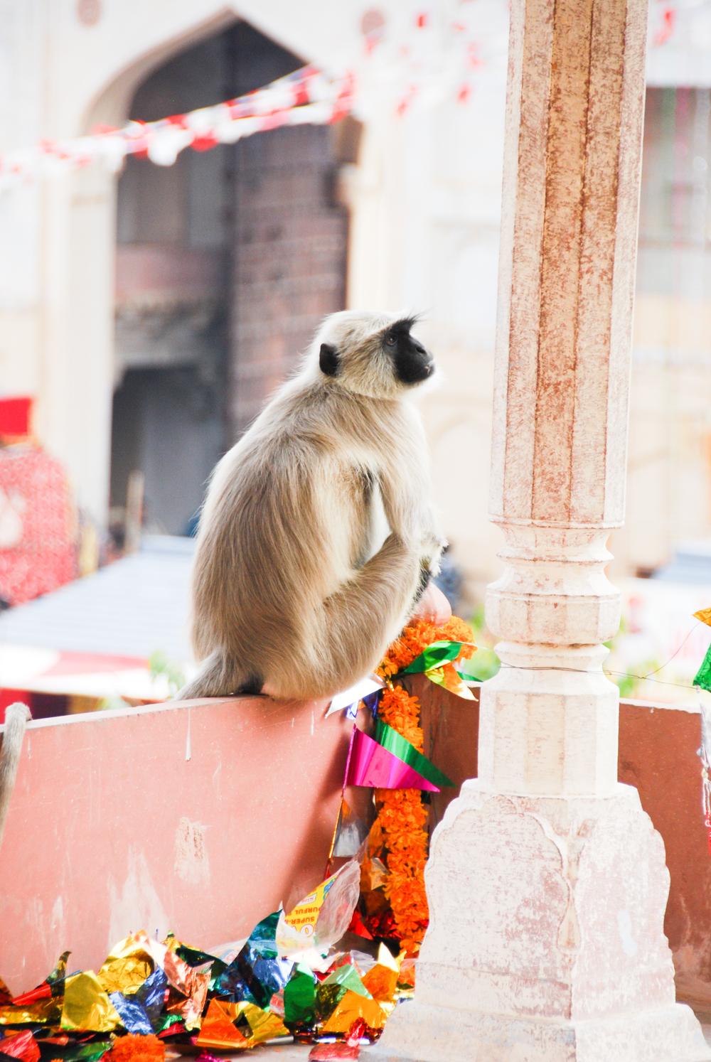 Jaipur_©HOGGER&Co._026.jpg