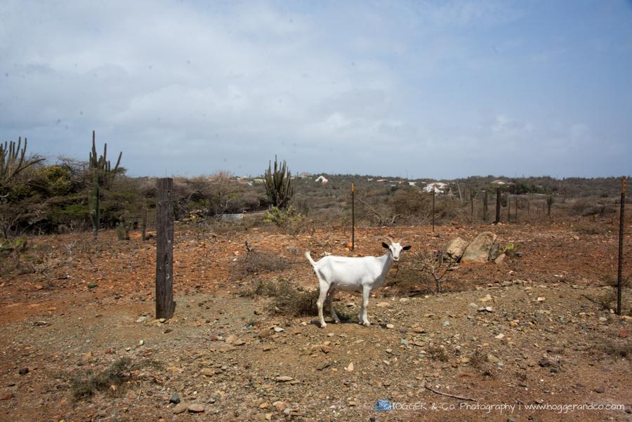 Aruba_Hyatt_©HOGGER&Co._WM_088.jpg