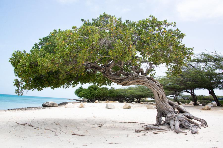 Aruba_Hyatt_©HOGGER&Co._WM_116.jpg