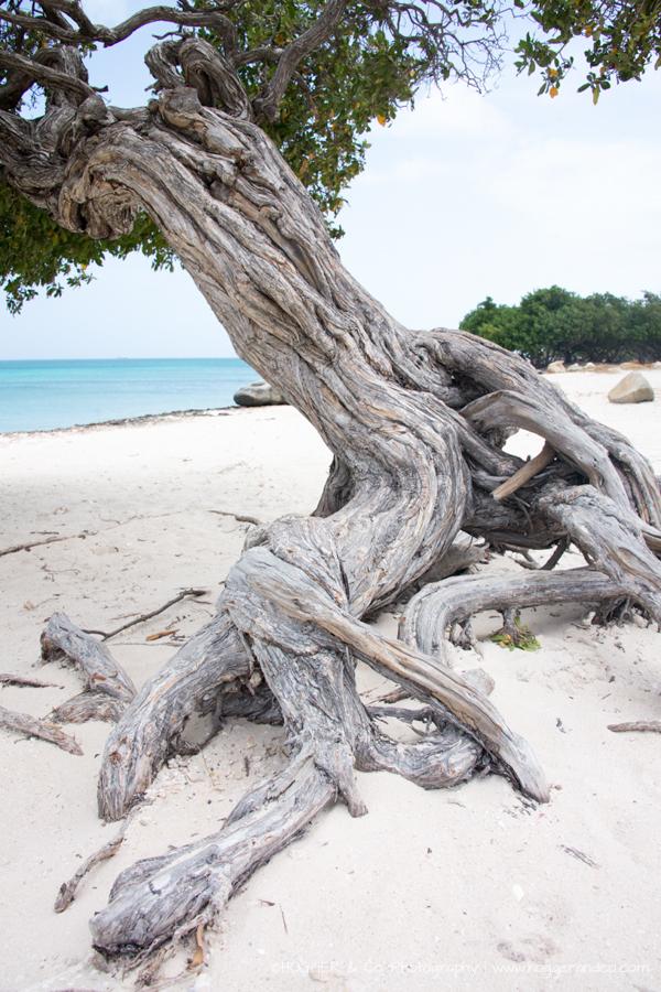 Aruba_Hyatt_©HOGGER&Co._WM_119.jpg