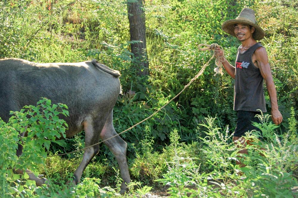 Guilin guy with buffalo small.jpg