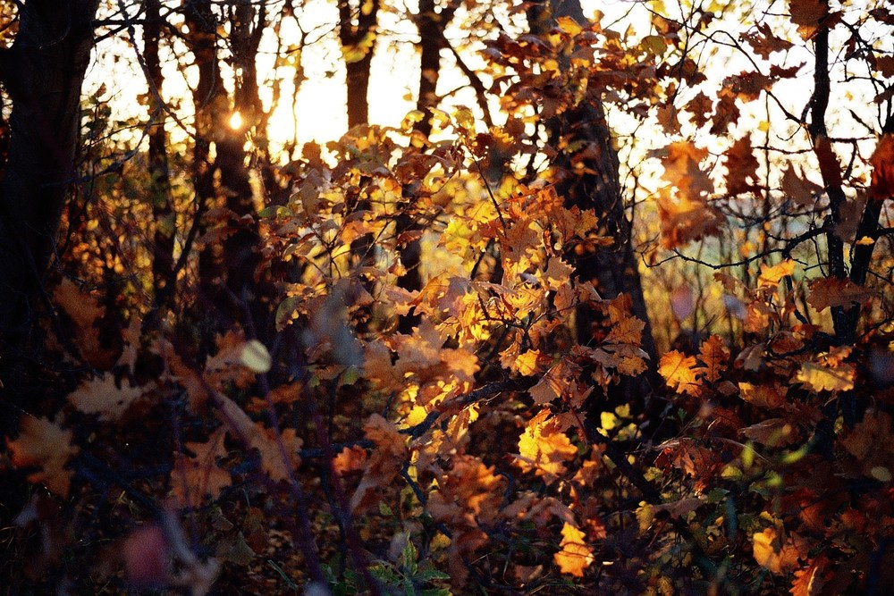 taylor_sheppard_photographer_stonewall_film_fall_nature_trees.jpg