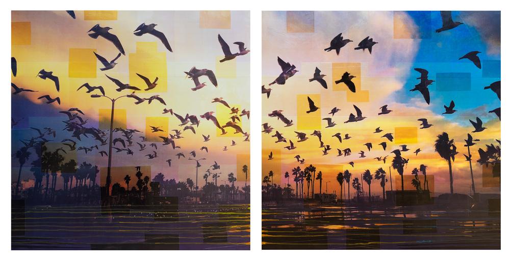 birds-duo.png