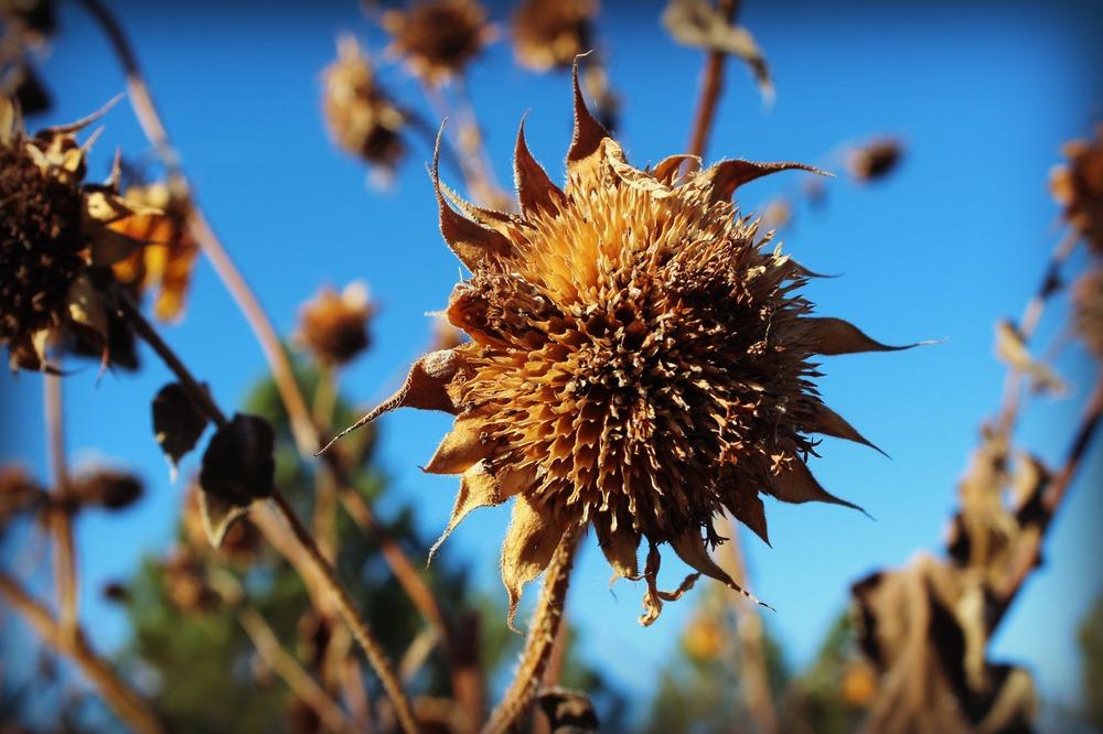 autumnfarm4.jpg