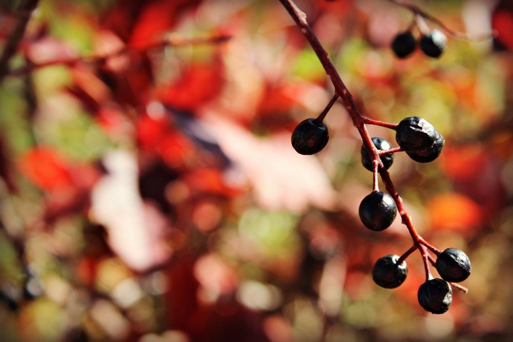 autumnfarm7.jpg