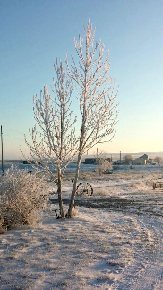 frost2.jpg