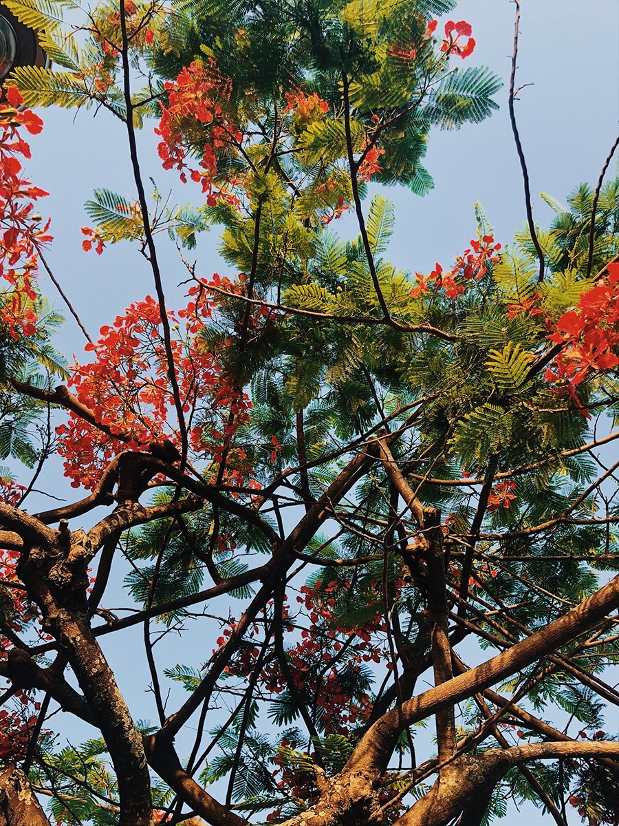 CAMINHADA-LAGOA-AMANDA-KRAEMER-17.jpg