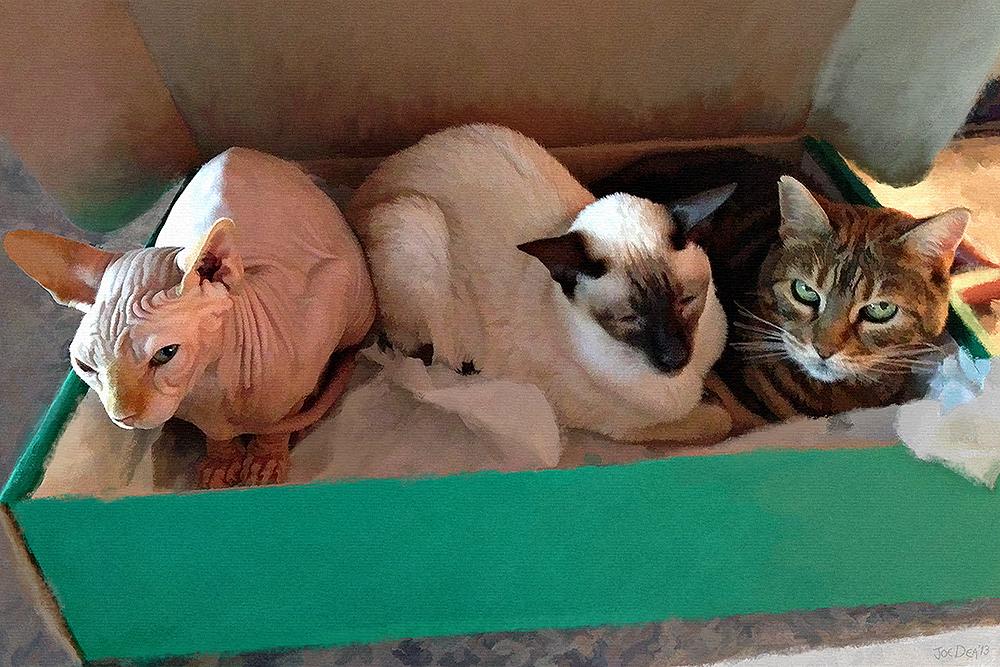Three Cats Painting