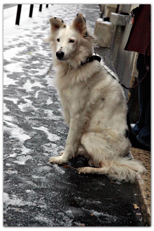 dog artist photo