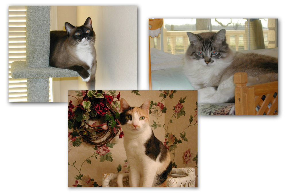 cat artist photo