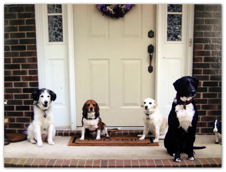 four dogs on steps artist photo