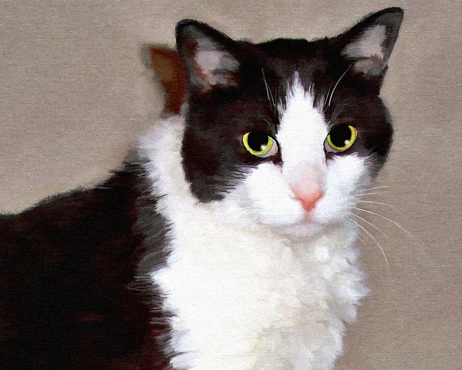 Detail - Tuxedo Cat Painting