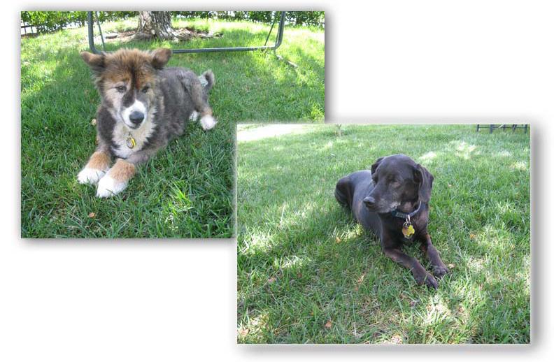 two dog photos
