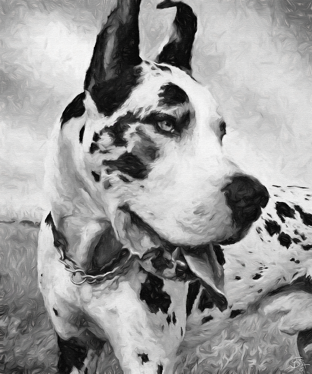 Great Dane B&W Dog Painting