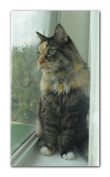 Cat in window photo