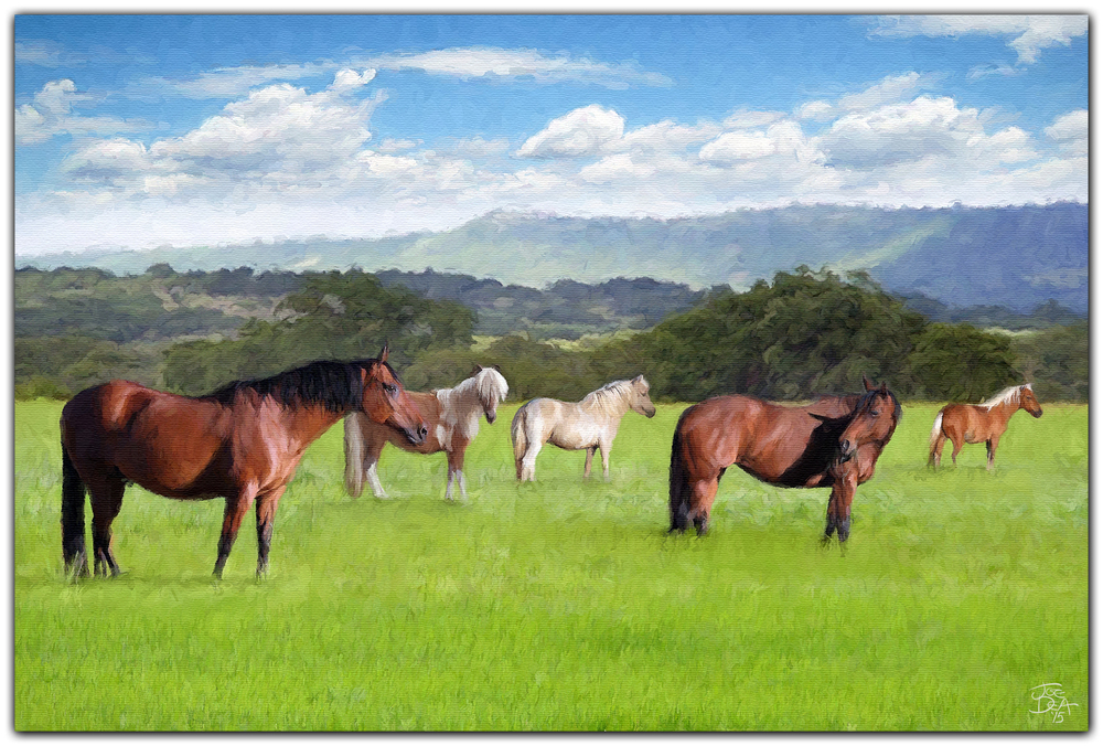 EQUINE HORSE OIL PAINTING