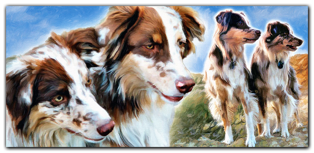 Red Merle Australian Shepherds Painting