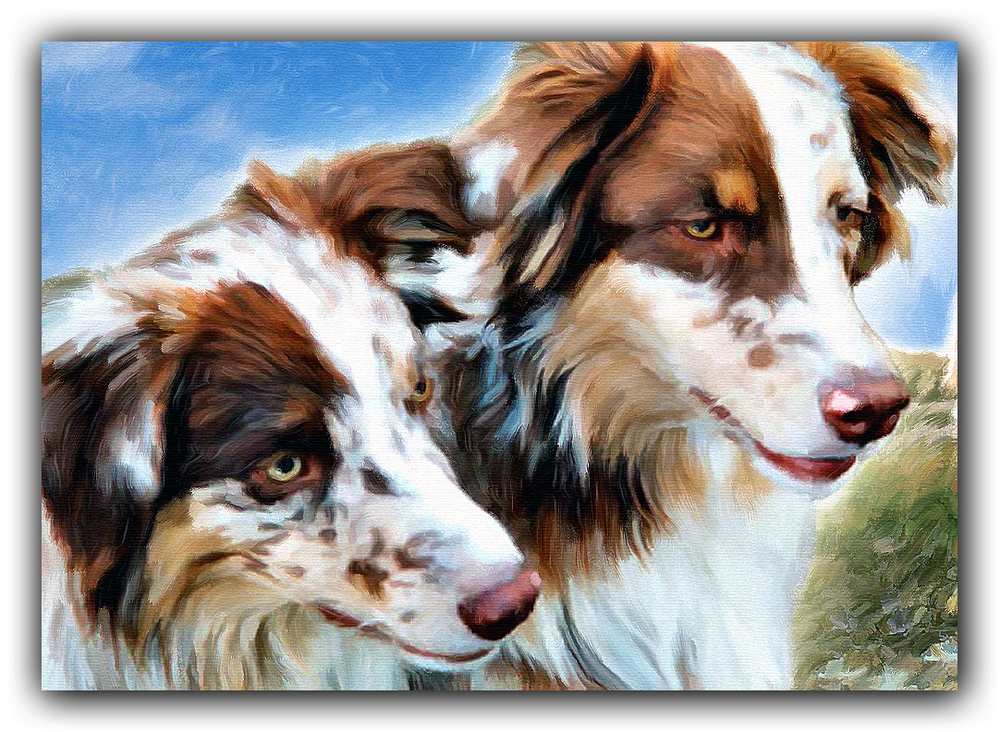 Detail: Red Merle Australian Shepherds Painting