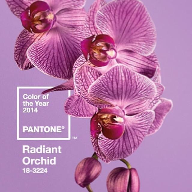 Radiant Orchid 2- Pantone.jpg