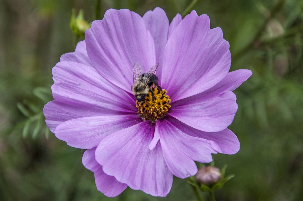 Bee 2Bee - USE.jpg