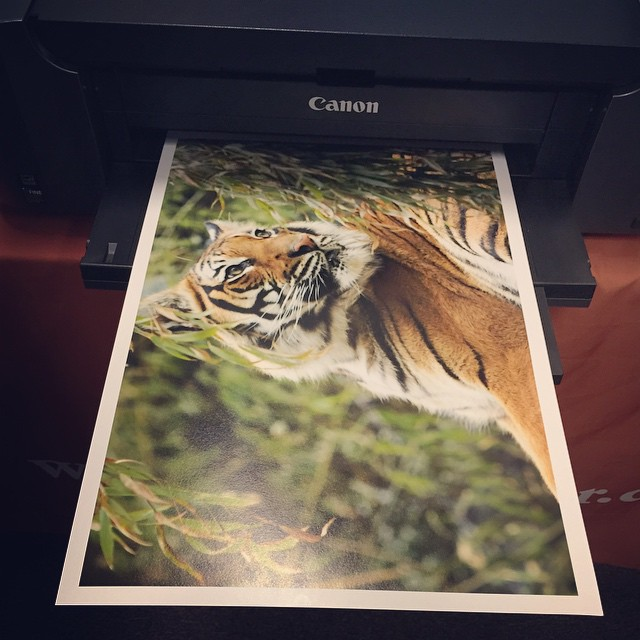 Wren's print. Photo by Wren Bentley.