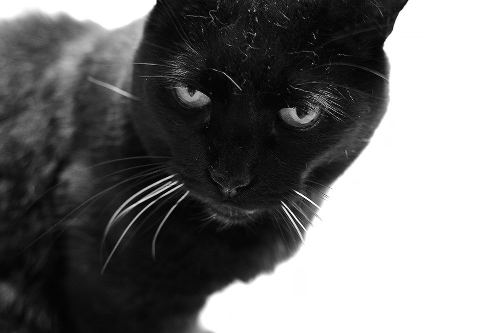 Who says black kitties can't photograph well? I can see the dust and flying fur on this one! Bilbo doesn't clean himself at all and relies on us to brush him, that's why he always seems unkempt, lol.