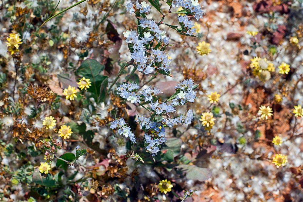 7 wild flowers.jpg